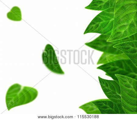 Fresh leaves in different green tones isolated on white