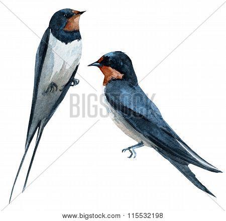 Watercolor raster swallow bird