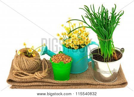 Gardening Concept With Grass, Seeds, Flowers, Hank