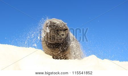 the cat on the snow falling on the background of blue sky
