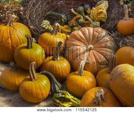 Pumpkins at a flower shop