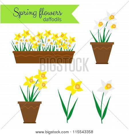 White narcissus and yellow daffodils set.