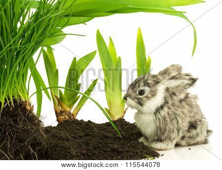 Cute Rabbit, Pet On The Soil With Green Plants