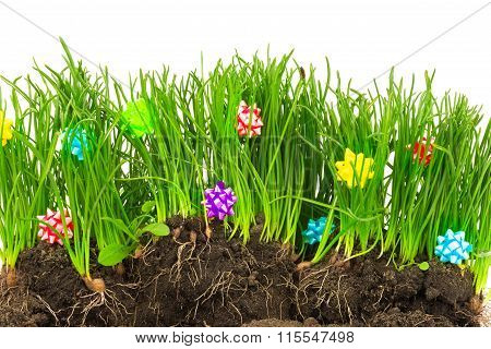 Spring Fresh Grass With Colorful Decoration