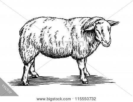engrave ink draw sheep illustration