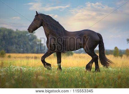 Frisian Horse Run