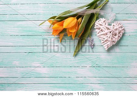 Fresh  Spring Yellow Tulips Flowers And White Decorative Heart  On Turquoise  Painted Wooden Backgro
