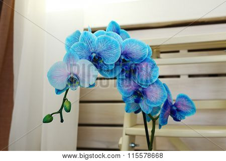 Beautiful blue orchid flower in the room on the floor, close up