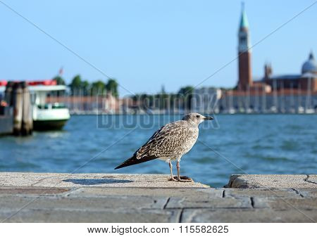 Seagull In Piazza San Marco And The Church Of St. George In The Venetian Lagoon
