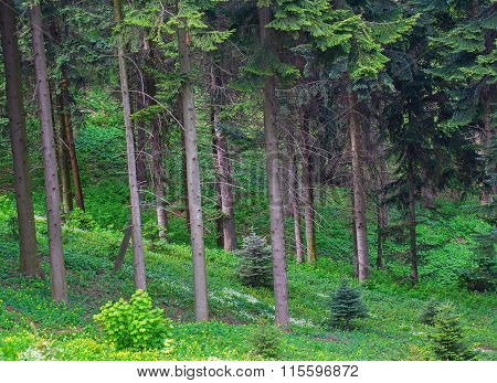 Green Forest Edge
