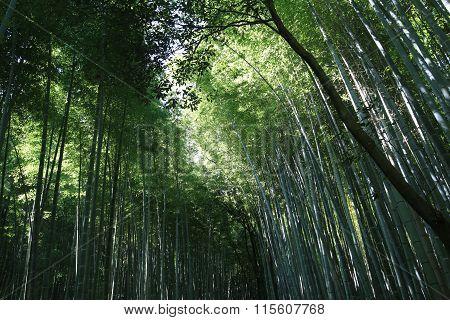 Arishiyama Bamboo Forest