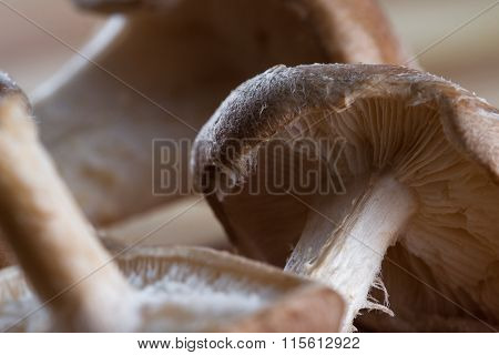 Raw Organic Shiitake Mushrooms
