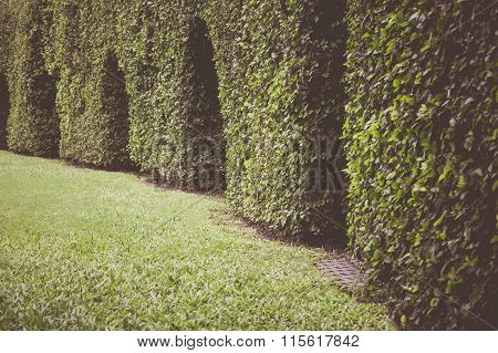 Green Leaves Wall Background. Outdoor Horizontal Hedges With Grass And Arch. Vintage Picture Style.