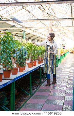Full length of concentrated pretty young woman gardener in striped apron working with flowers in garden center