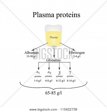 Plasma proteins. Albumin. Fibrinogen. Globulin. Infographics. Vector illustration