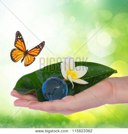 Hand holding green leaf and earth