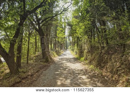 Sunlight breaking through foliage on a paved forest road