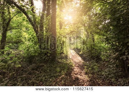 Sunlit path in a forest during a sunrise