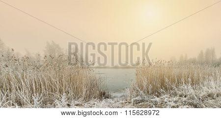 Reeds Near The Lake