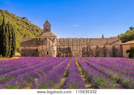 Purple lavender field in Valensole, France