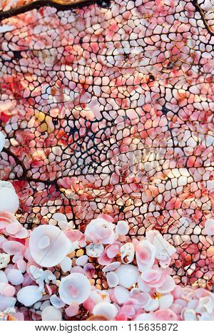 Tiny pink shells and piece of coral. Pink sand beach on Barbuda island in Caribbean made of tiny pink shells