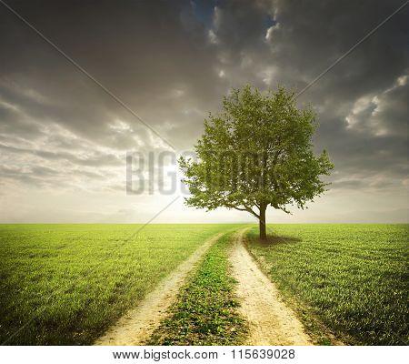 Lonely tree in green field