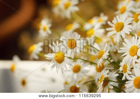 Bouquet Of Camomiles At Sunlight. Summer Morning. Natural Cute Background