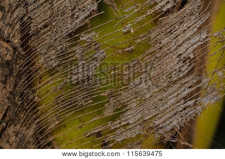 Background Texture Vegetable Fiber On Trunk Of Palm