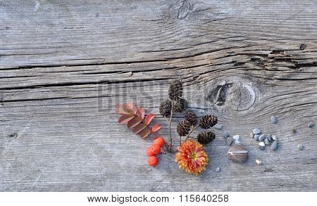 Plants and Pebbles on Old Board