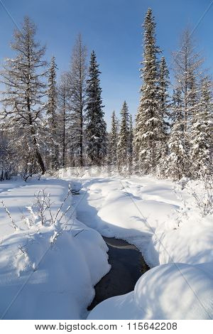 Stream In The Winter Forest