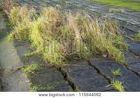 grass growing wild