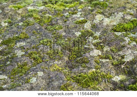 moss and lichen growing on a rock