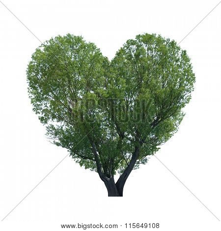 Concept of Valentine's Day. Tree in shape of heart isolated on white background