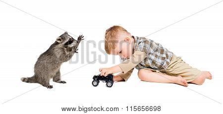 Funny raccoon and a boy playing a toy car