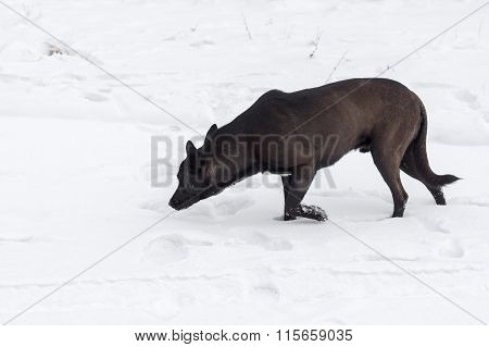 Stray dog being on hunting stage for mouse