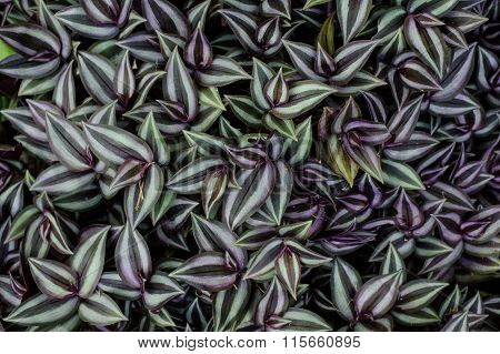 Purple And Green Plant Backgrounds.