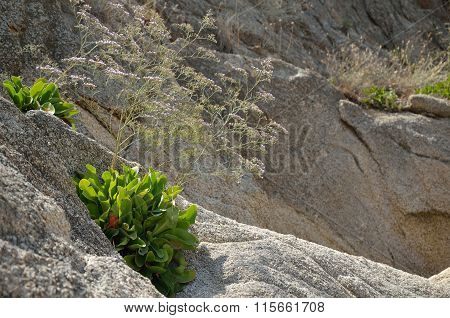 Plants In Rocks