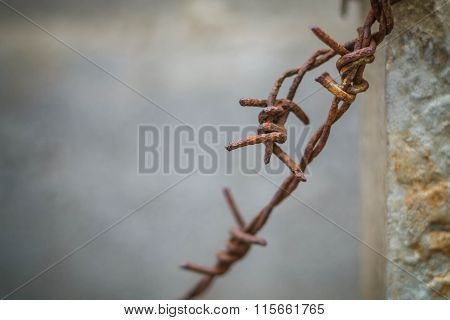 Barb old and a rusty barbed wire