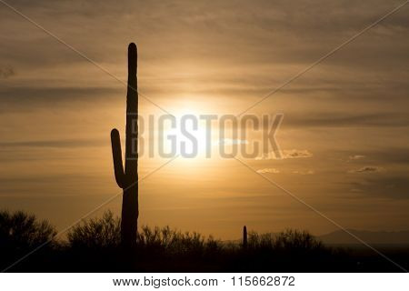 An image of a saguaro cactus during sunset at Superstition desert in Arizona shows the rugged detail of a dry, parched wilderness