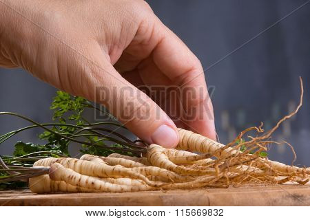 Hand With Parsley Roots