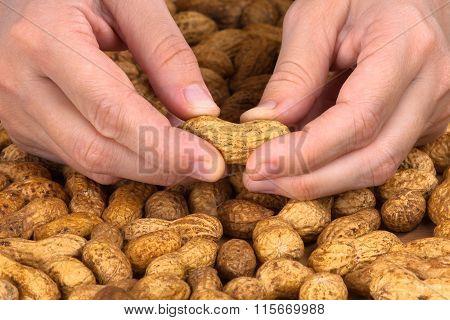 Hands Peeling Peanuts, Closeup