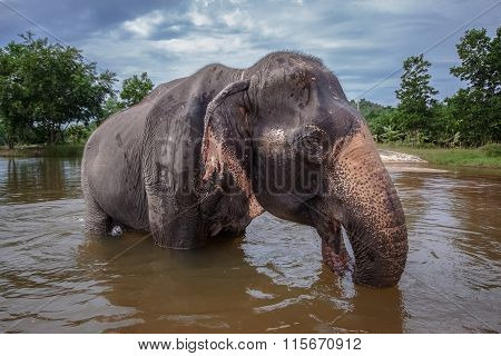 The elephant bathes in a lake