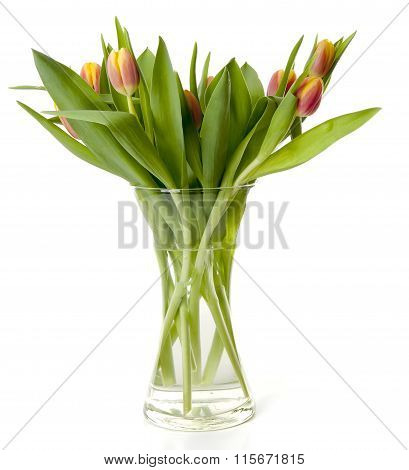 Bouquet Of Dutch Tulips In Vase