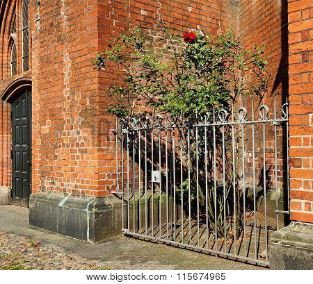 Roses Behind Iron Fence Near Red Brick Wall