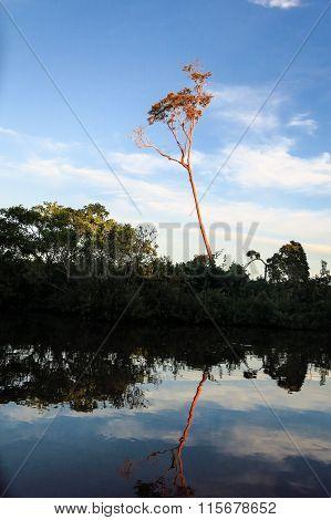 Yacuma River. Bolivian Jungle.