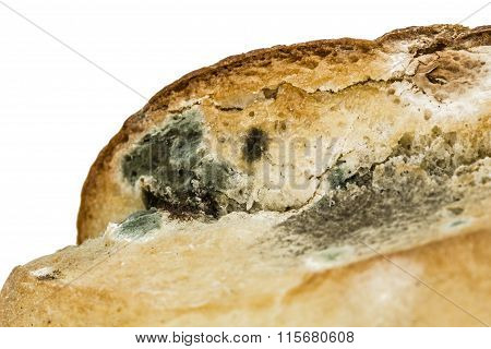 Moldy  Bread Close-up, Isolated On White Background