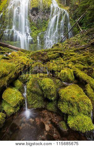 Proxy Falls In Oregon Rain Forest