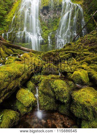 Proxy Falls In Oregon Rain Forest.