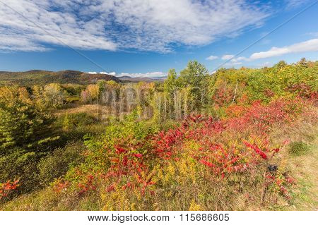 Colorful White Mountain National Forest In Autumn, New  Hampshire