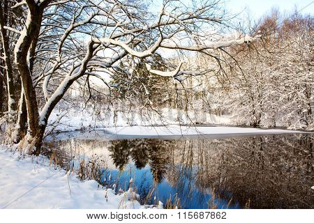 Winter tree against a blue sky with reflection in water.